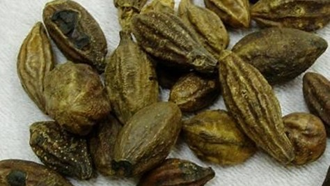 research papers on terminalia chebula Terminalia chebula is an important plant in pharmaceutics, its importance is generally due to number of therapeutic uses it is commonly called hritaki.