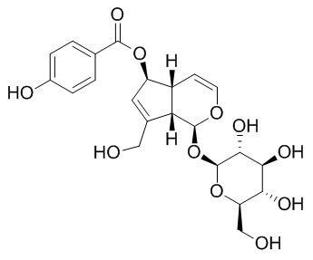 6-O-对羟基苯甲酰基桃叶珊瑚苷