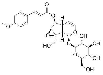 6-O-对甲氧基肉桂酰梓醇