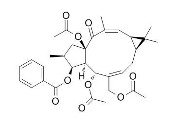 大戟因子L7b