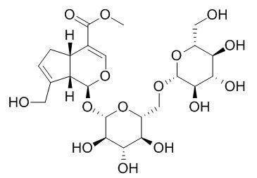 京尼平-1-O-龙胆双糖苷