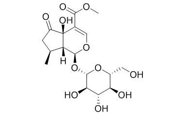 Hastatoside