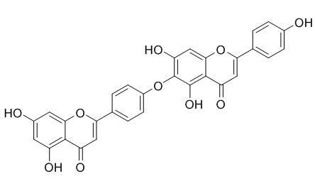 日本扁柏黄酮