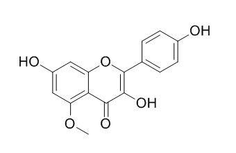 5-甲氧基山奈酚; 5-甲氧基莰非醇