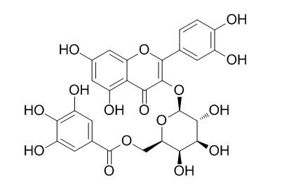 槲皮素3-O-(6''-没食子酰基)-β-D-半乳糖苷