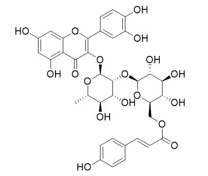 槲皮素-3-鼠李糖-(6''-对羟基反式桂皮酰)葡萄糖甙