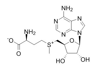 S-Adenosyl-L-Methtonine